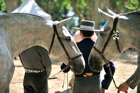 rencontres equestre beaucaire 2019