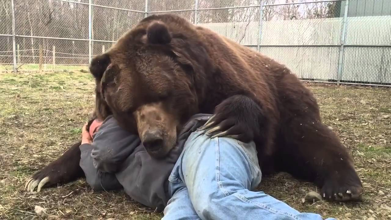 rencontre homme ours